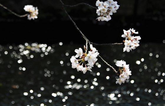 竹田城跡」の桜絶景 と 産業遺産「神子畑選鉱所跡」