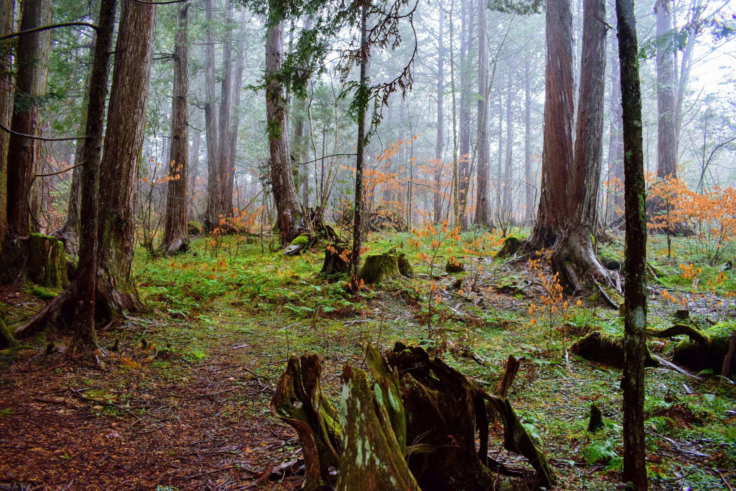 赤木自然休養林