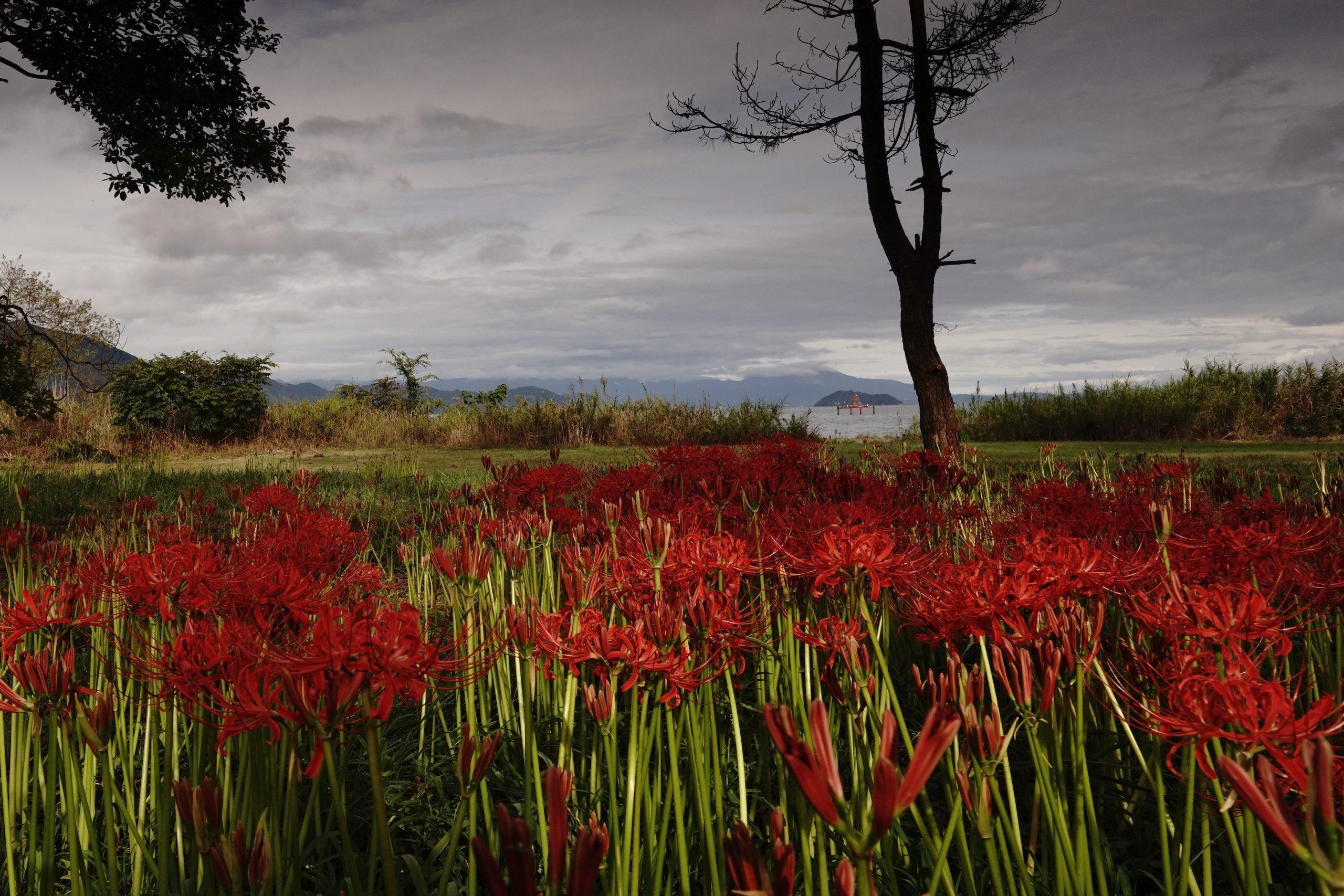 「湖畔の秋華」 撮影:Ken様