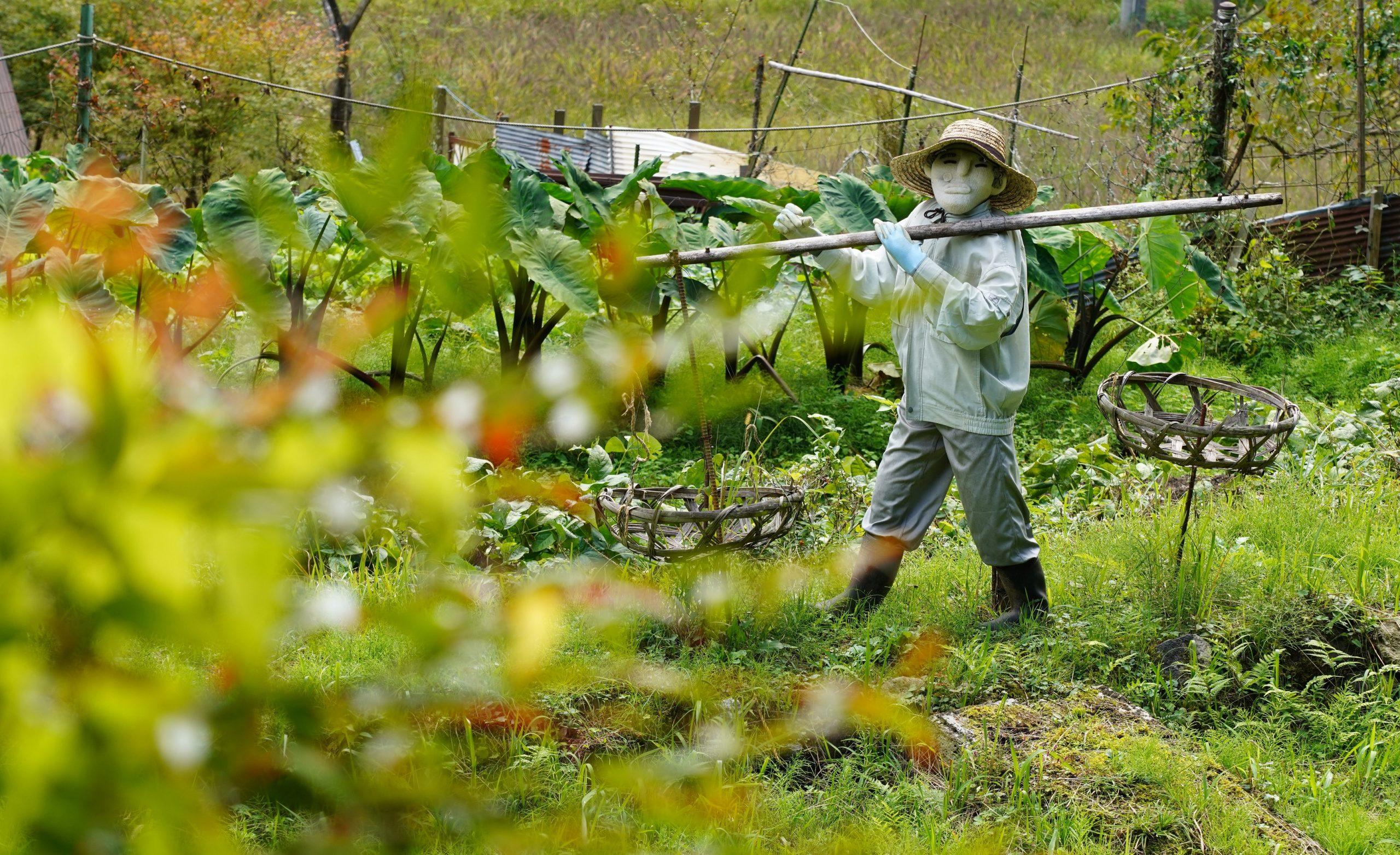 「収穫の刻」 撮影:morimori様